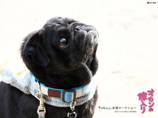 okannoyomeiri_hachi3_1024.jpg
